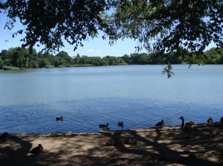 Prospect Park Lake2