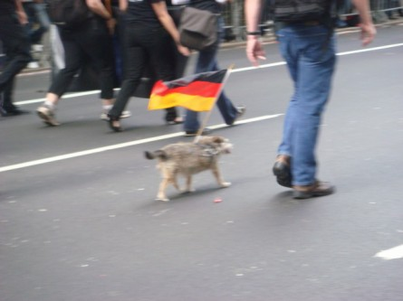 20070915-steuben-parade-39-german-flag-dog.jpg