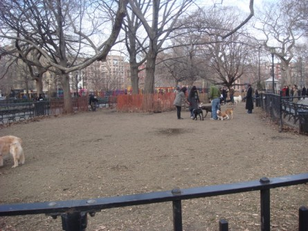 20080113-tompkins-square-park-06a-dog-run.jpg