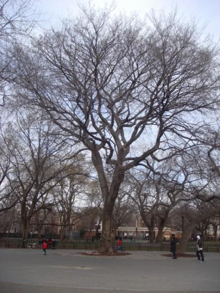 20080113-tompkins-square-park-14-hare-krishna-tree.jpg