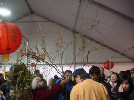 20080202-chinatown-flower-market-07.jpg