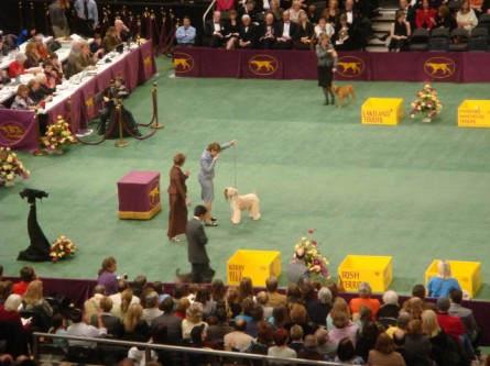 20080211-westminster-46-soft-coated-wheaten-terrier-_15.jpg