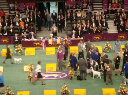 20080211-westminster-50-terrier-winner-congratulated.jpg